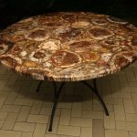 Petrified Wood Table The Best