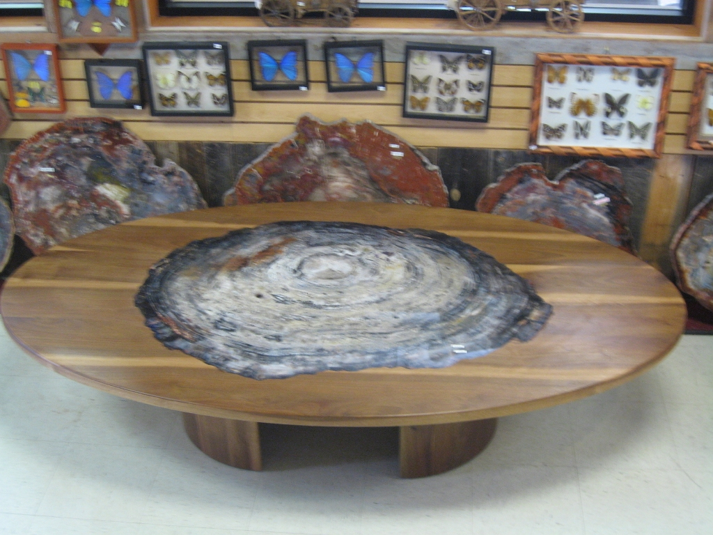 Picture of: petrified wood tables united states only