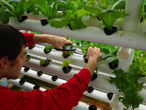 Picture of: Geeky Hydroponic Vegetable Gardening