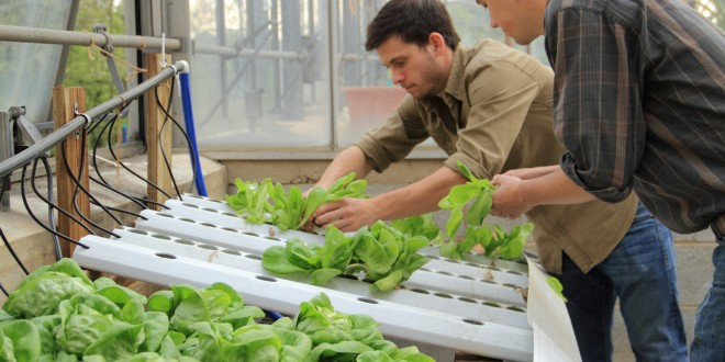 Hydroponic Vegetable Gardening Basic