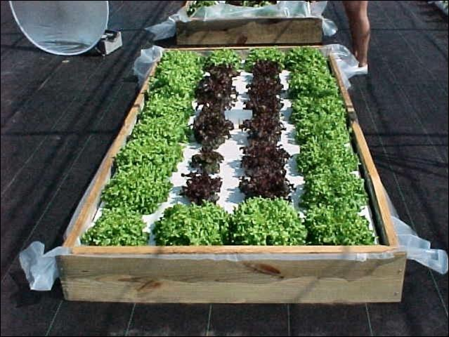 Picture of: Hydroponic Vegetable Gardening Box