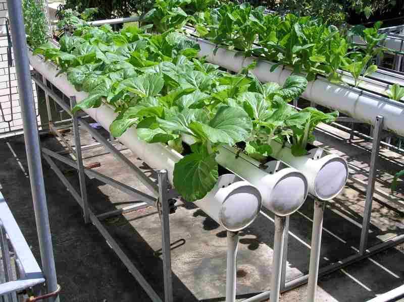 Picture of: Hydroponic Vegetable Gardening Ideas
