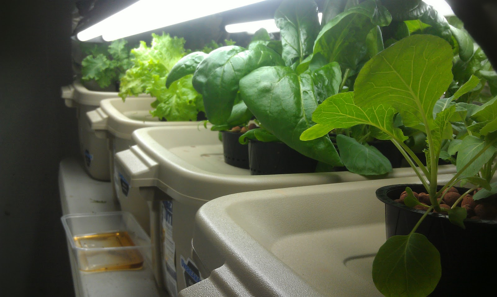 Picture of: Hydroponic Vegetable Gardening System