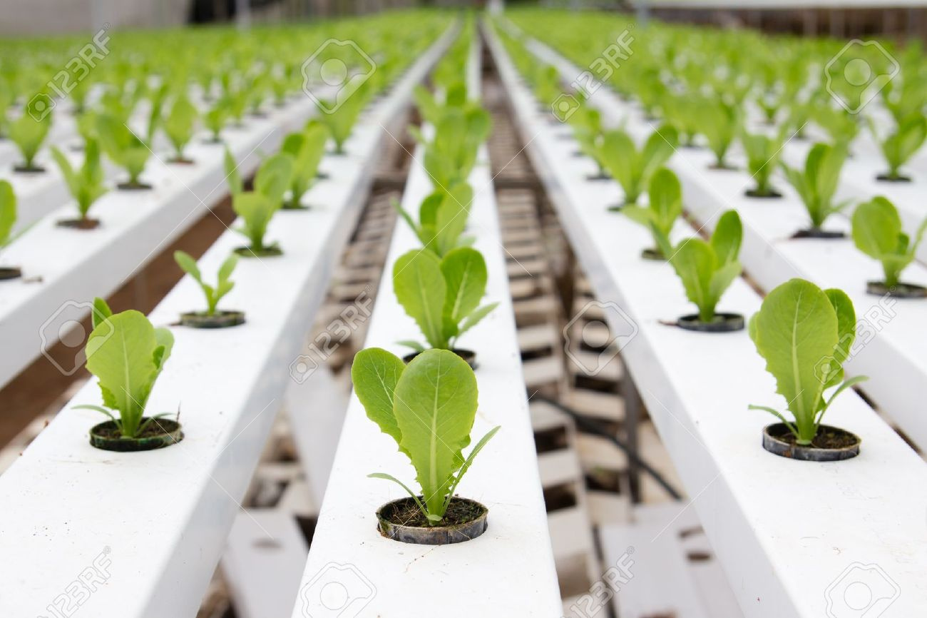 Picture of: Hydroponic Vegetable Gardening Tips