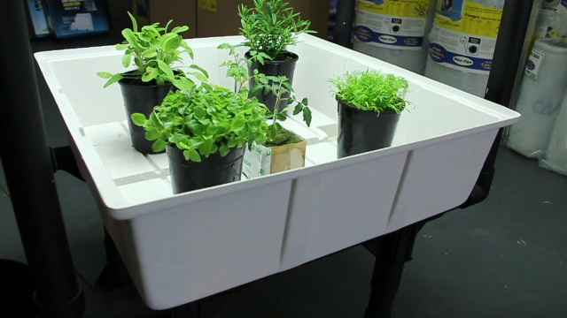 Picture of: Hydroponic Vegetable Gardening at Home