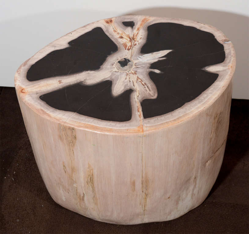 Image of: Petrified Wood Side Table Natural Color