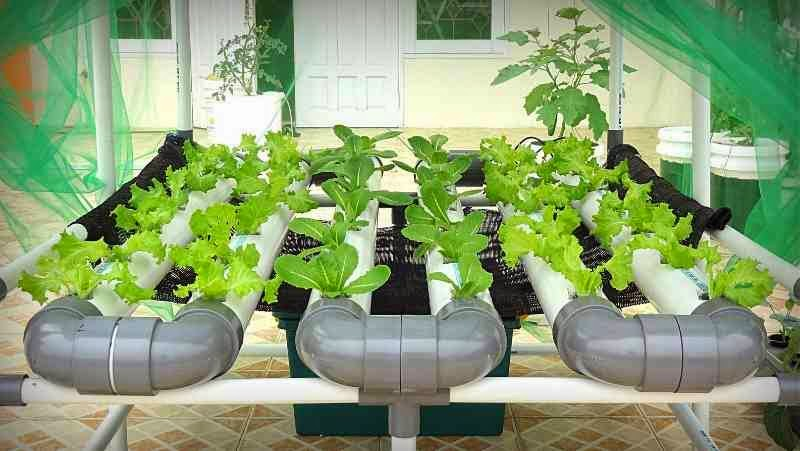 Picture of: modern Hydroponic Vegetable Gardening